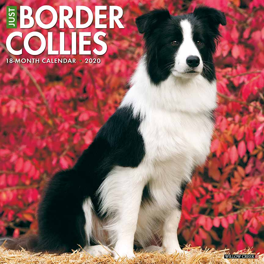 2020 Border Collies Calendar Willow Creek Press