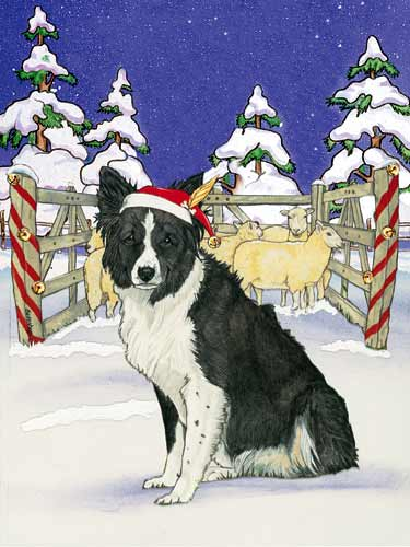 Border Collie Christmas Cards Santa's Cap