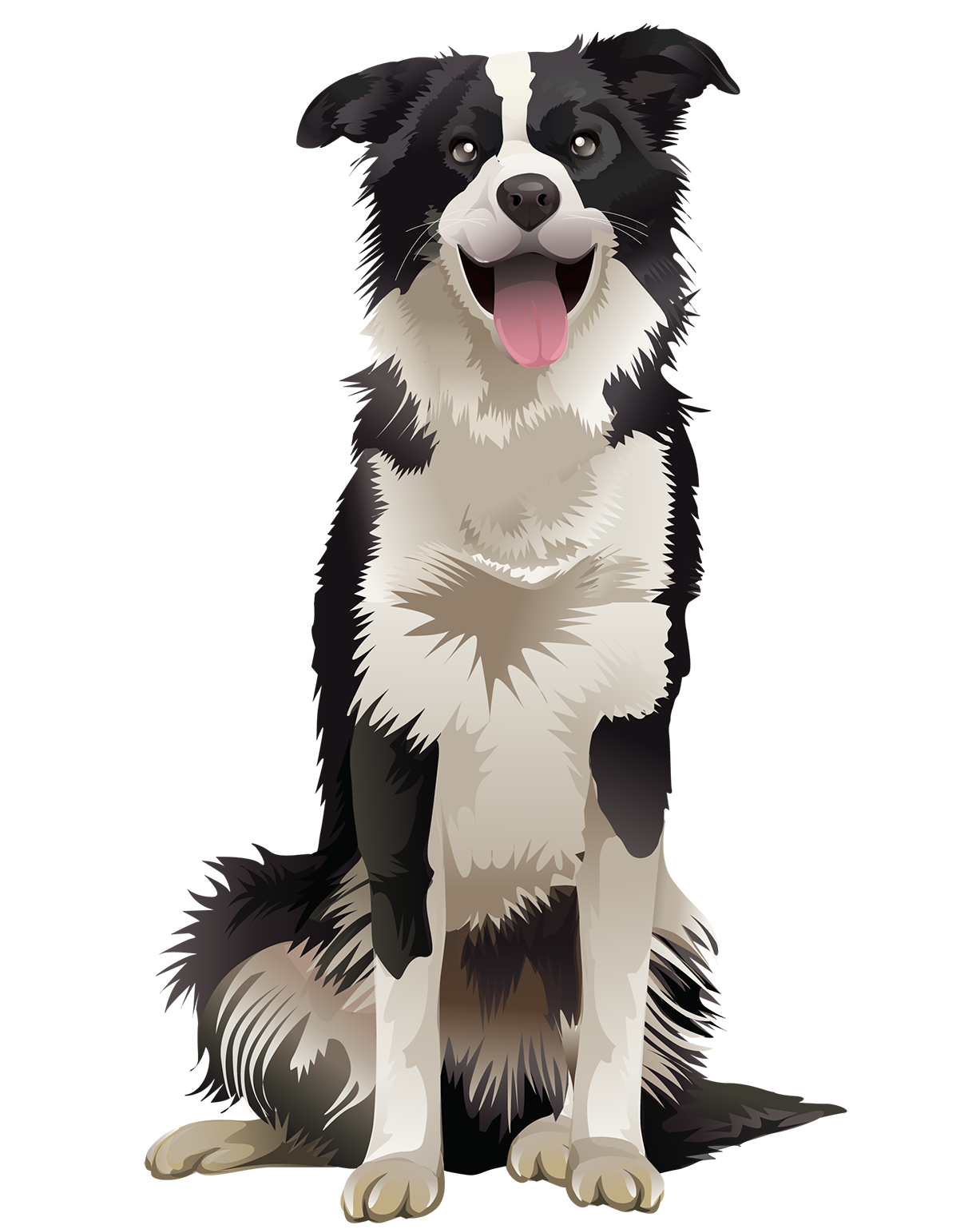 Border Collie T-Shirt Sitting - Vibrant Vector