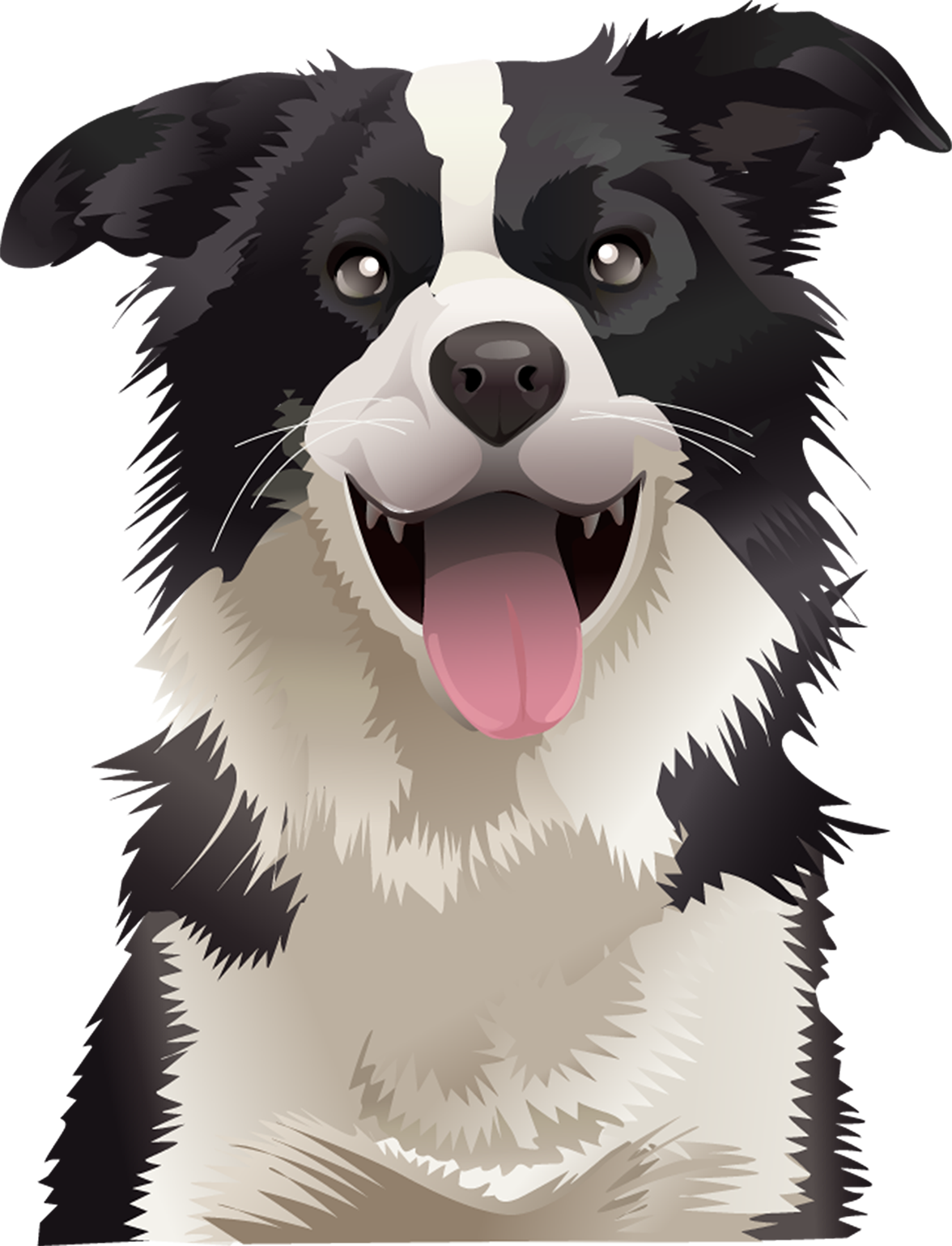 Border Collie T-Shirt Head Shot - Vibrant Vector