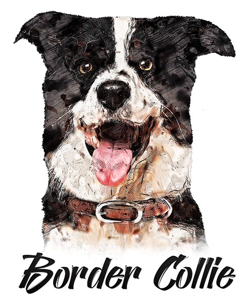 Border Collie T-Shirt - Vivid Colors