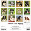 2020 Border Collie Puppies Calendar Willow Creek