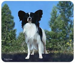 Papillon Mousepad