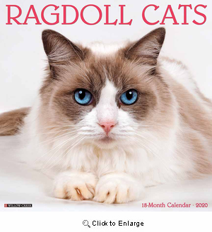 2020 Ragdoll Cats Calendar Willow Creek