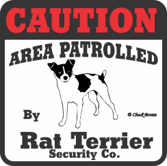 Rat Terrier Bumper Sticker Caution