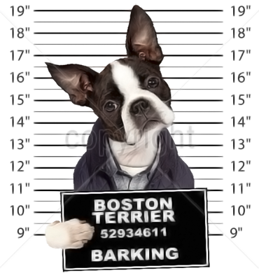 Boston Terrier T-Shirt - Mug Shot