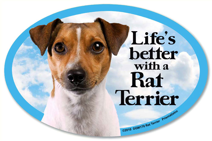 Rat Terrier Car Magnet - Life's Better