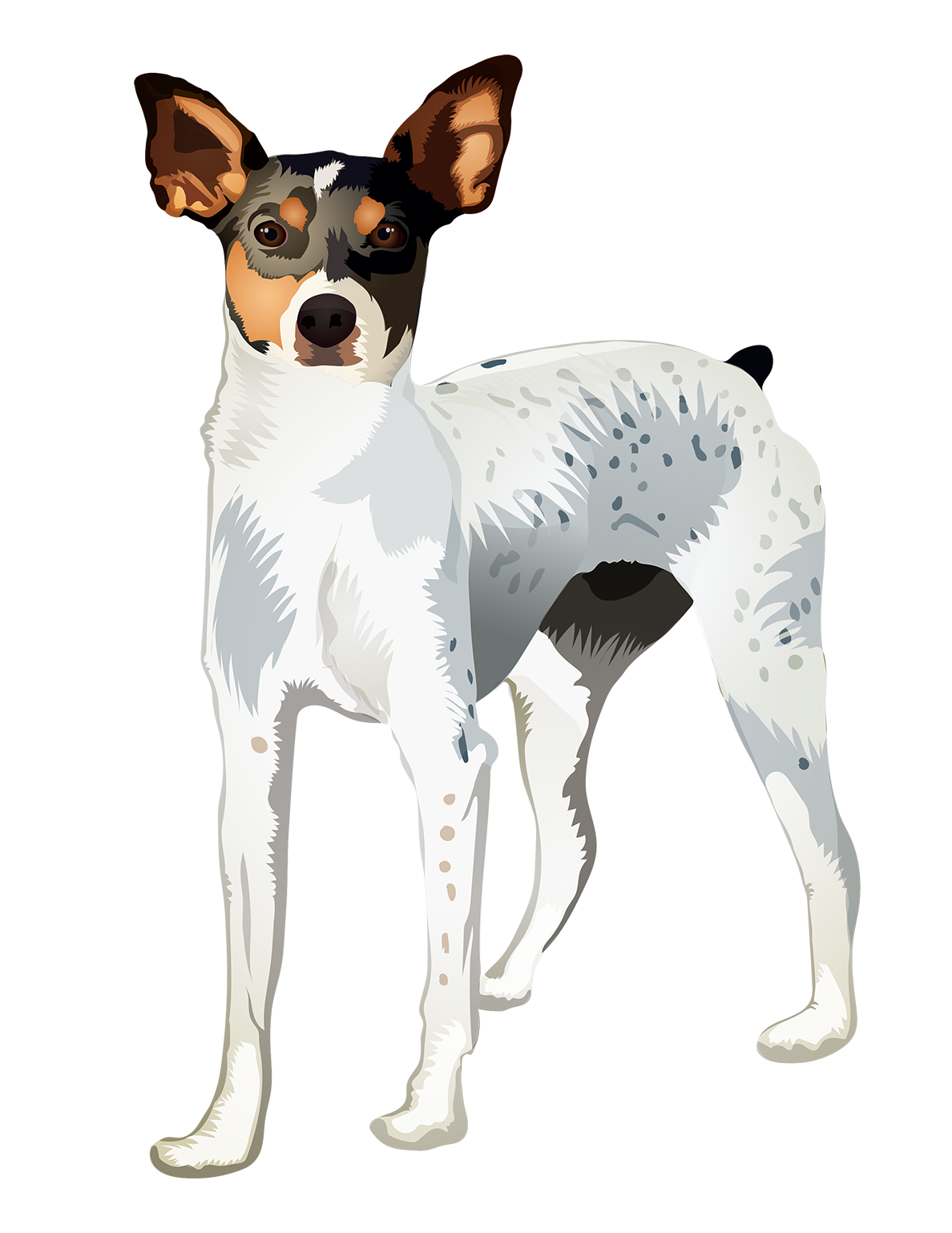 Rat Terrier T-Shirt - Vibrant Vector