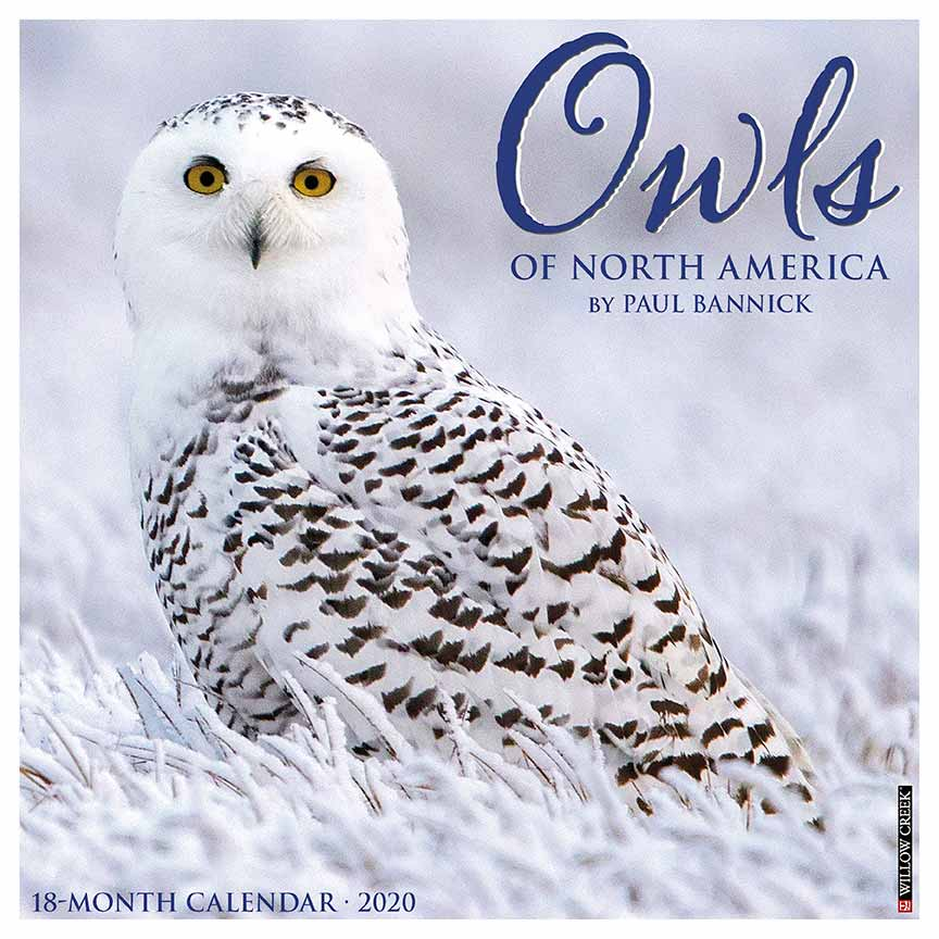 2020 Owls Calendar Willow Creek
