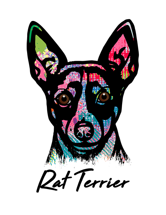Rat Terrier T Shirt Colorful Abstract