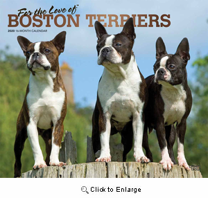 2020 Boston Terriers For the Love of Calendar Deluxe