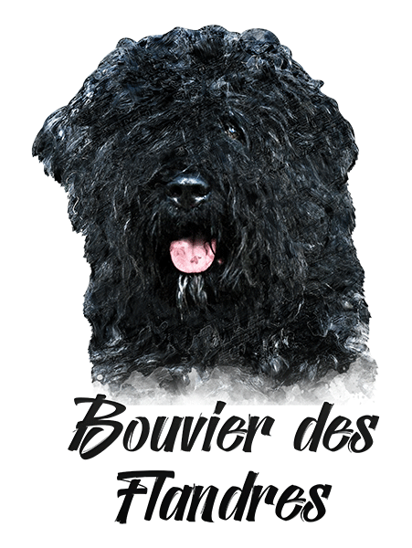Bouvier des Flandres T-Shirt - Vivid Colors