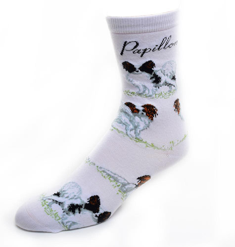 Papillon Socks Poses 2