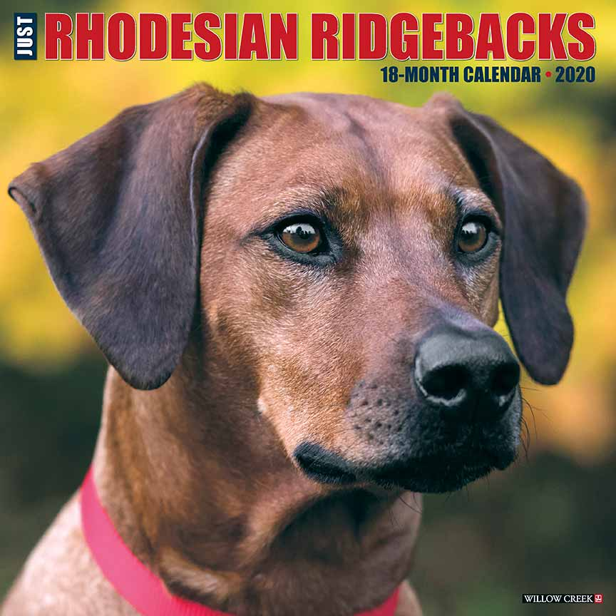 2020 Rhodesian Ridgebacks Calendar Willow Creek