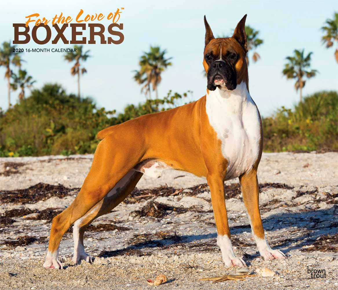 2020 For the Love of Boxers Deluxe Calendar