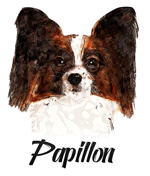 Papillon T-Shirt - Vivid Colors