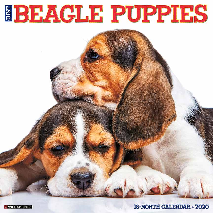 2020 Beagle Puppies Calendar