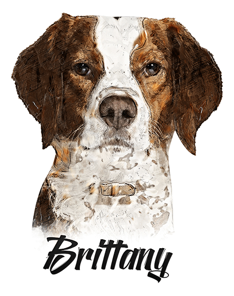 Brittany T-Shirt - Vivid Colors