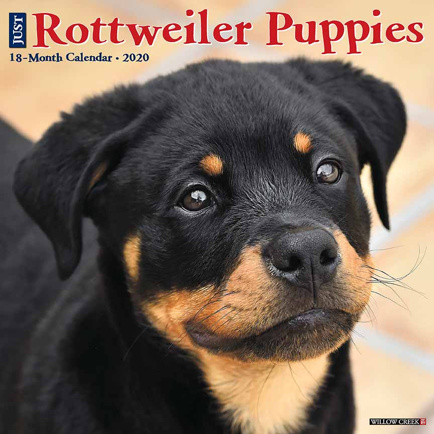 2020 Rottweiler Puppies Calendar Willow Creek