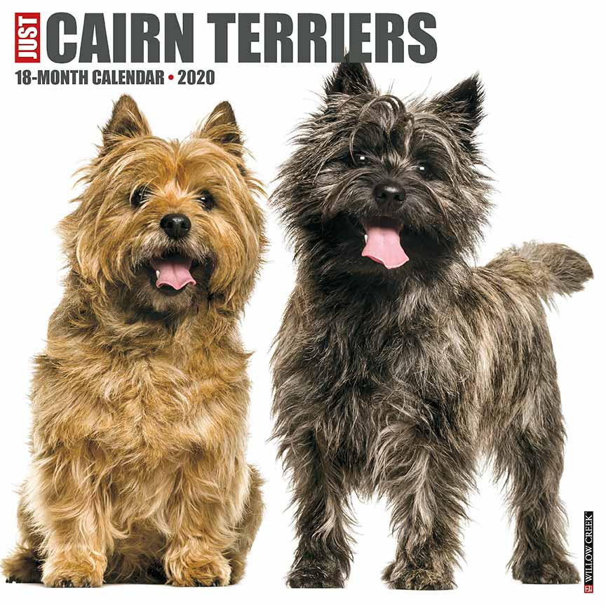 2020 Cairn Terriers Calendar Willow Creek Press