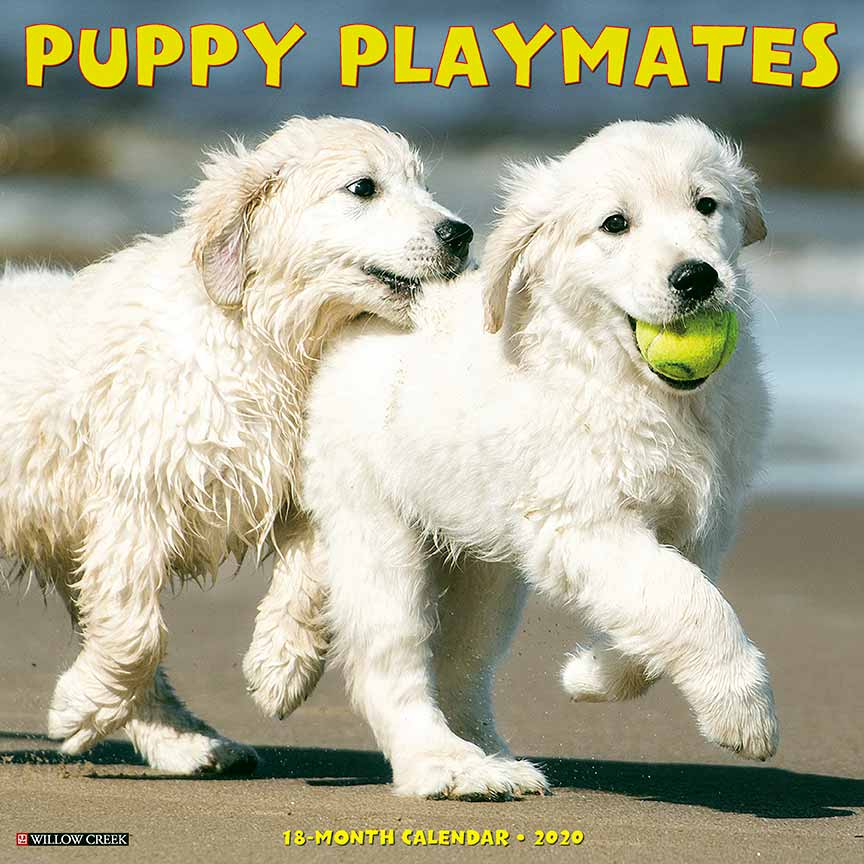 2020 Puppy Playmates Calendar Willow Creek