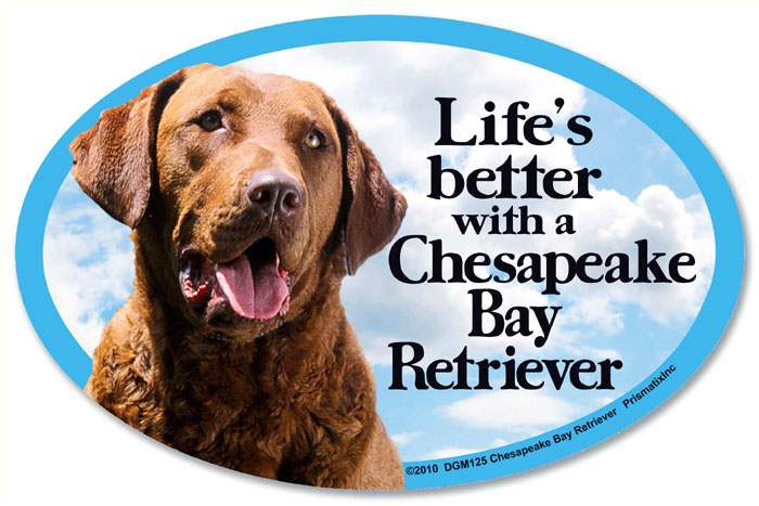 Chesapeake Bay Retriever Car Magnet - Life's Better