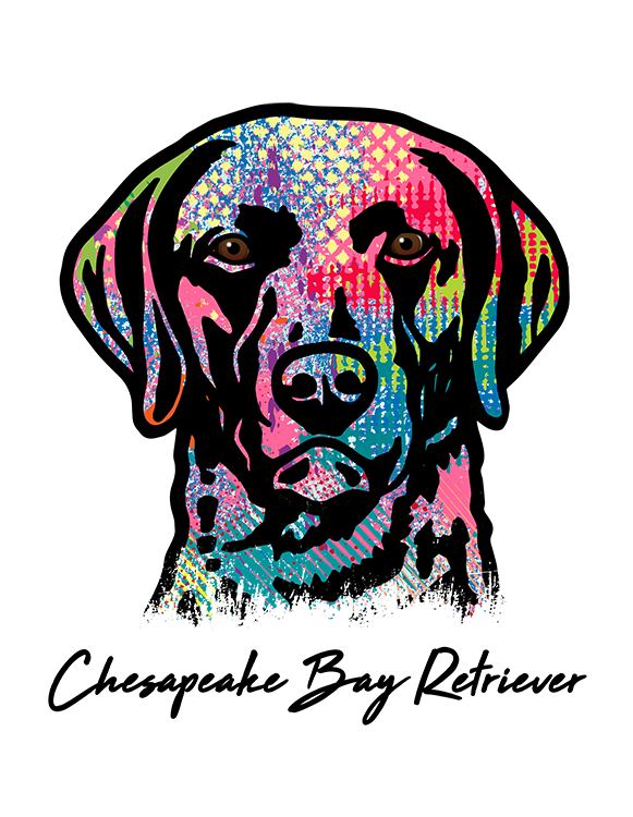 Chesapeake Bay Retriever T Shirt Colorful Abstract