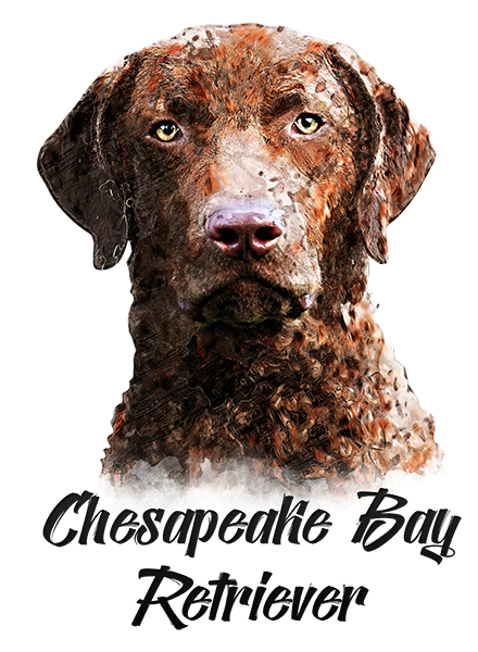 Chesapeake Bay Retriever T-Shirt - Vivid Colors