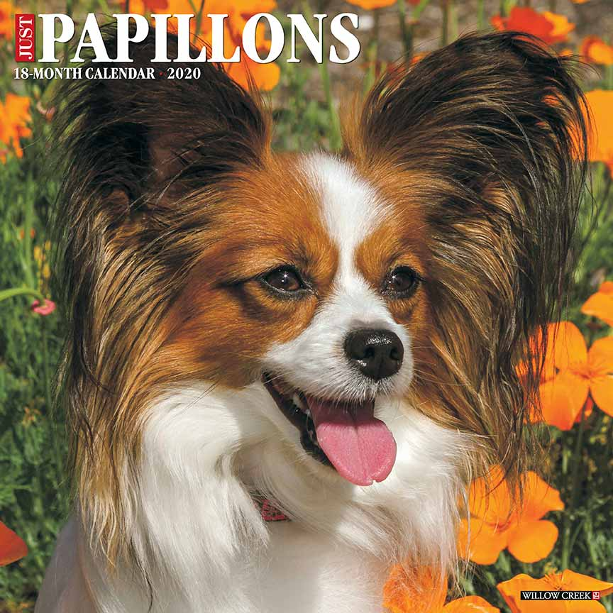 2020 Papillons Calendar Willow Creek