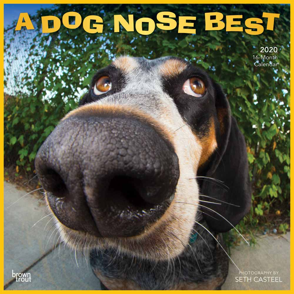 2020 Dog Nose Best Calendar