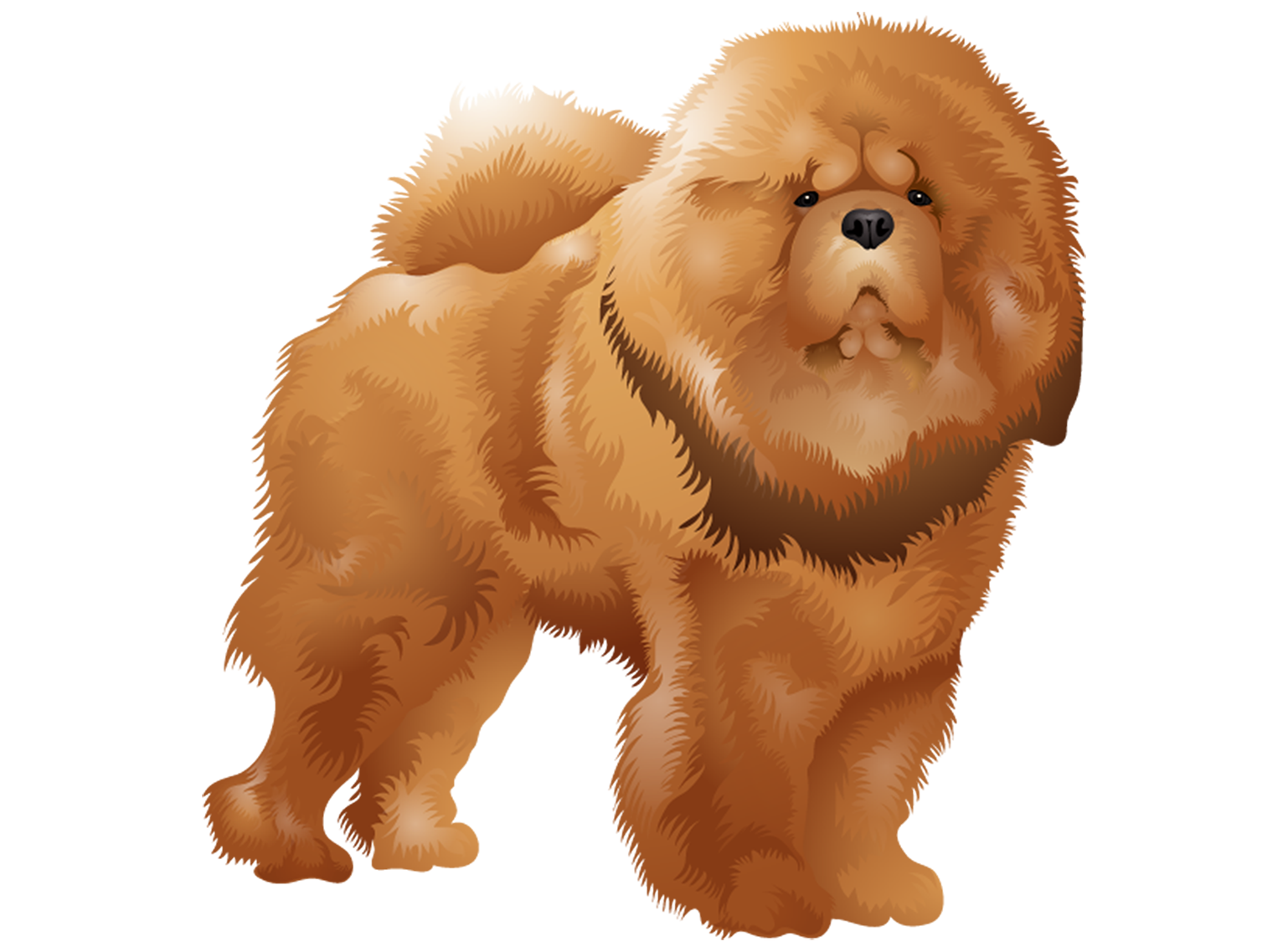 Chow Chow T-Shirt - Vibrant Vector