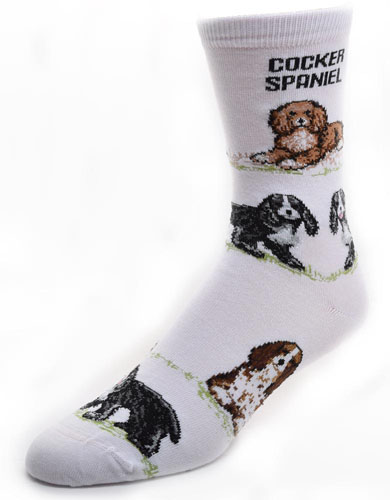 Cocker Spaniel Socks Poses 2