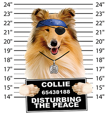 Collie T-Shirt - Mug Shot