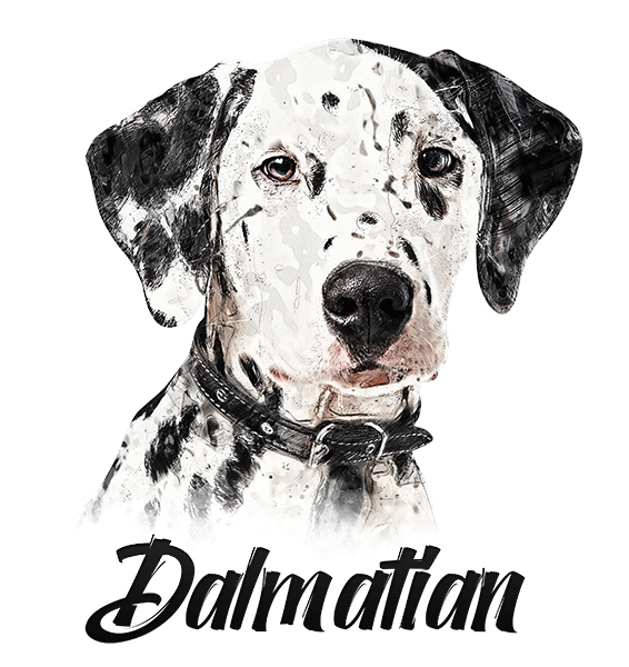 Dalmatian T-Shirt - Vivid Colors