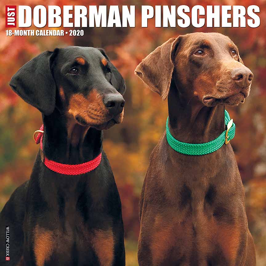 2020 Dobermans Calendar Willow Creek Press
