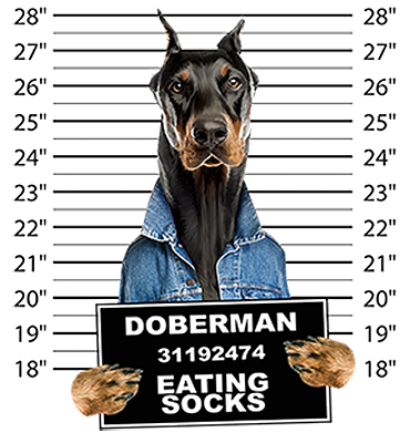 Doberman Pincher T-Shirt - Mug Shot