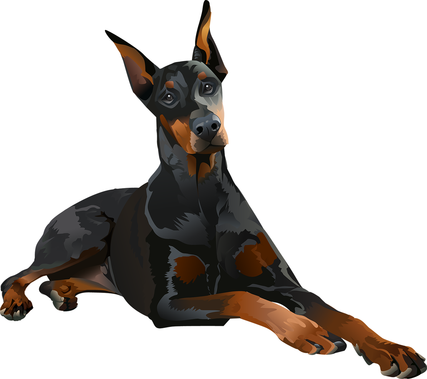 Doberman Pinscher T-Shirt Laying Down - Vibrant Vector