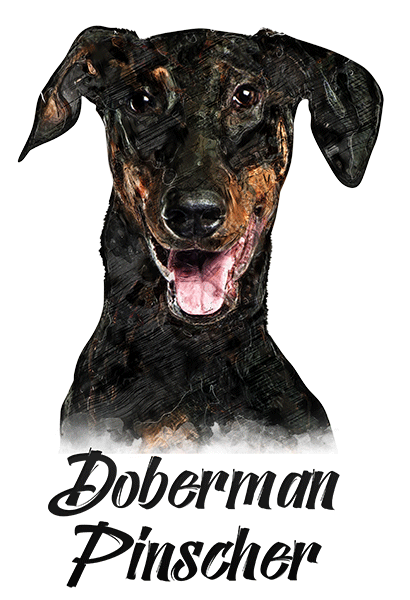 Doberman T-Shirt - Vivid Colors