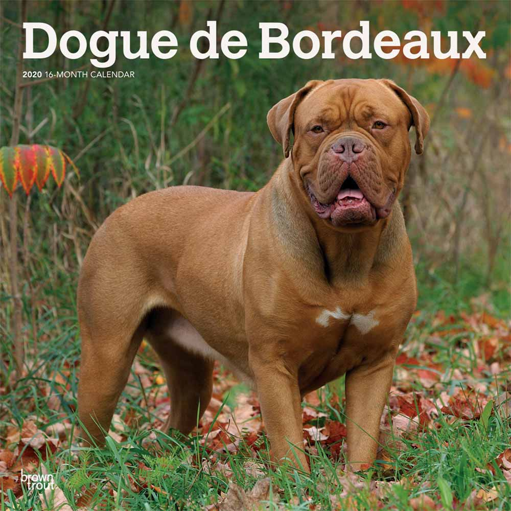 2020 Dogue de Bordeaux Calendar