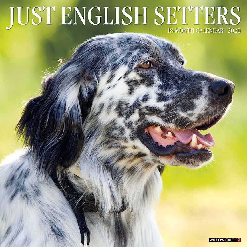 2020 English Setters Calendar Willow Creek