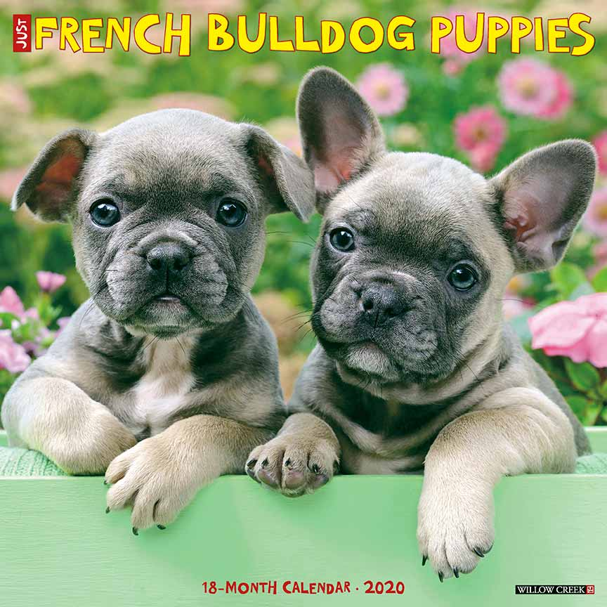 2020 French Bulldog Puppies Calendar