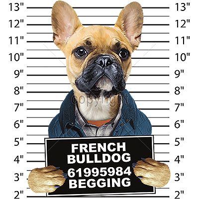 French Bulldog T Shirt - Mug Shot