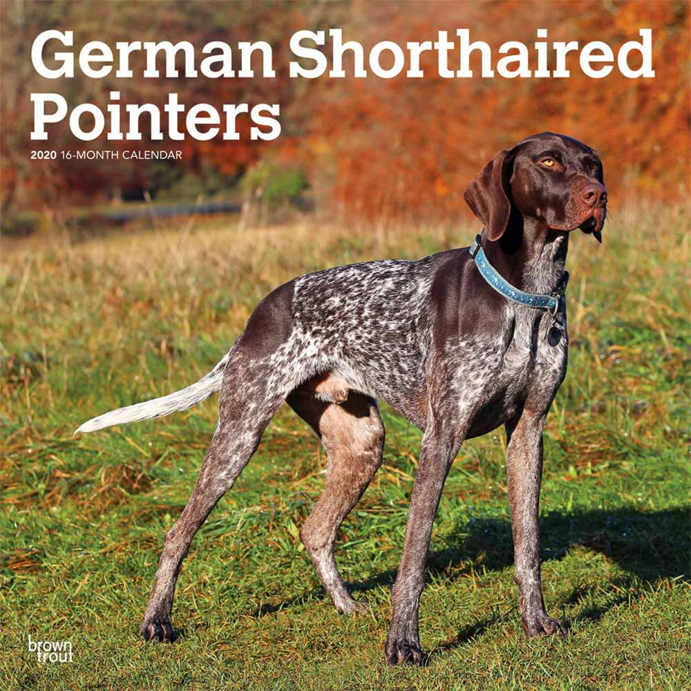 2020 German Shorthaired Pointers Non Cropped Calendar