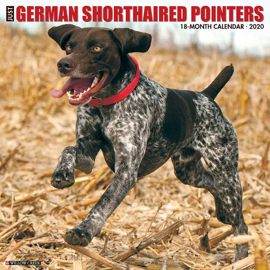 2020 German Shorthair Pointers Calendar Willow Creek Press