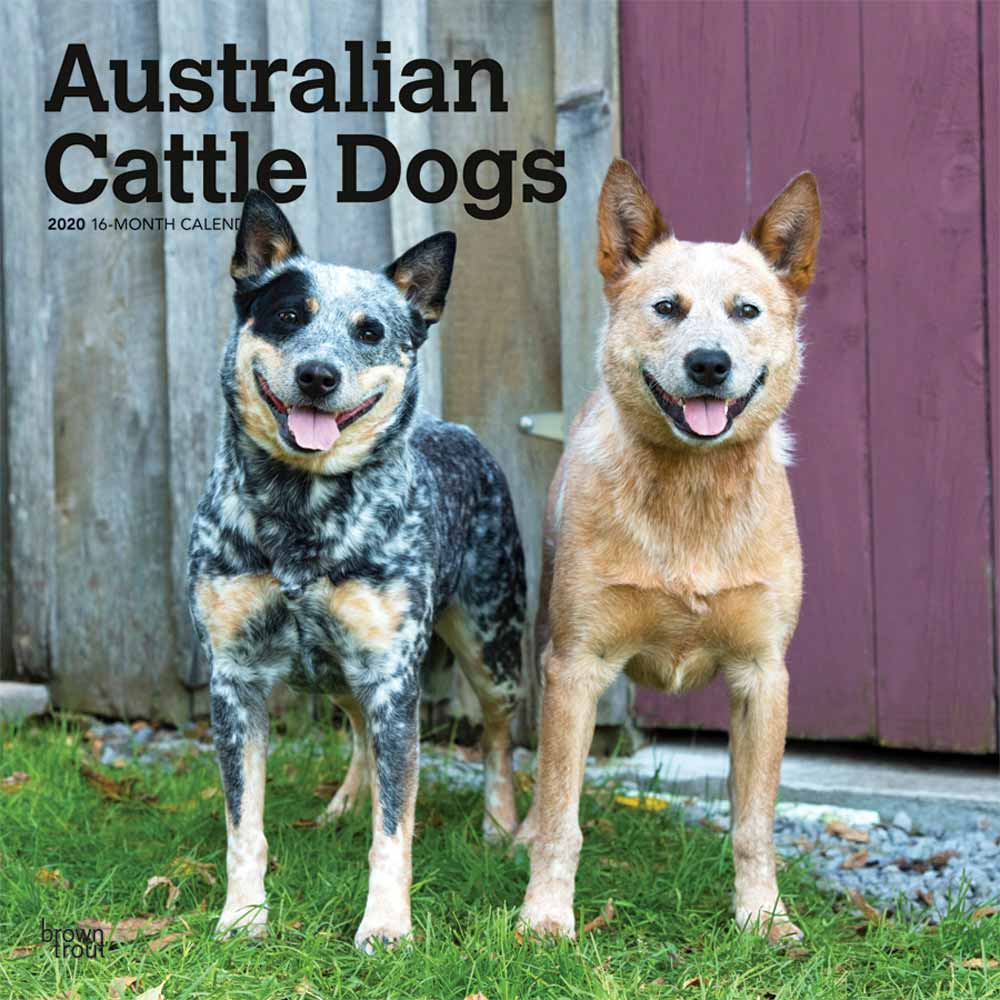 2020 Australian Cattle Dogs Calendar