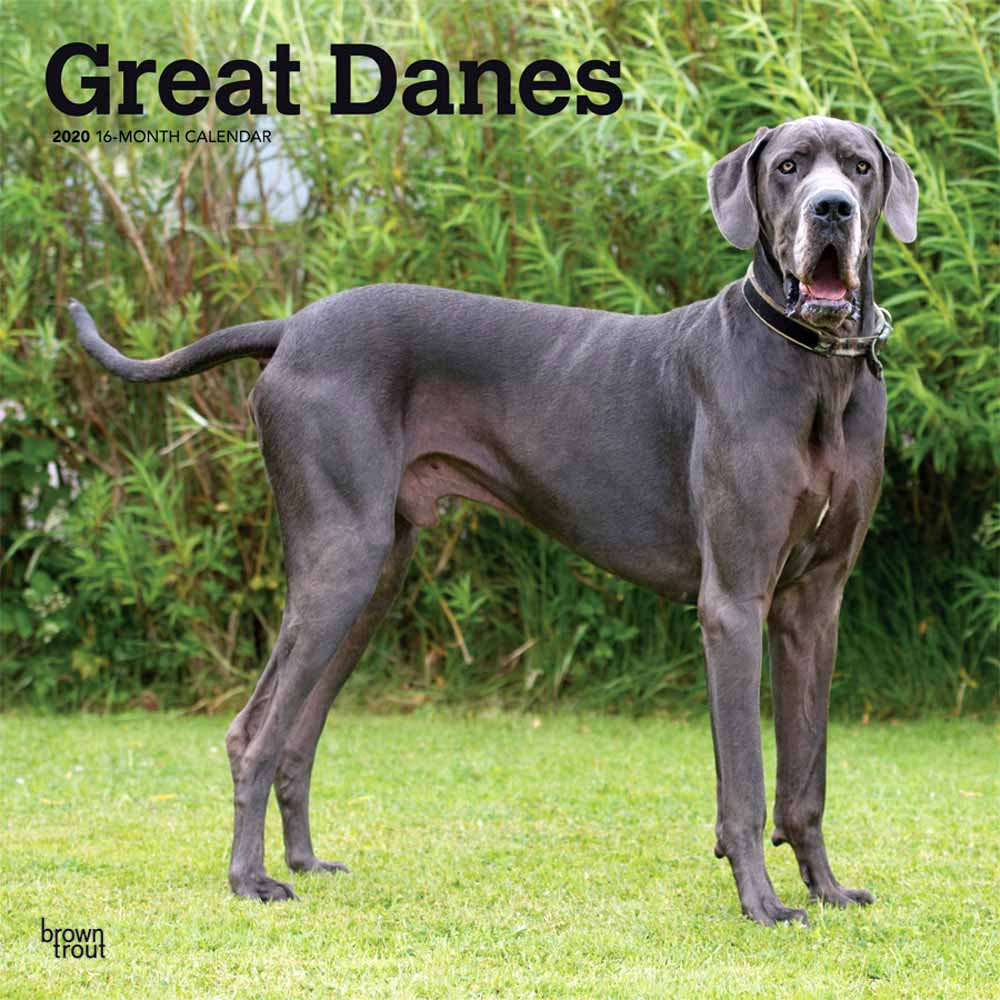 2020 Great Danes Non Cropped Calendar
