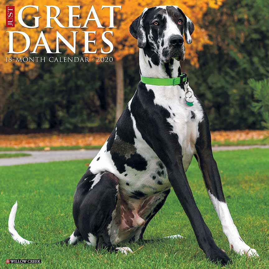 2020 Great Danes Calendar Willow Creek