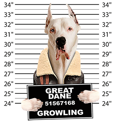 Great Dane T-Shirt - Mug Shot