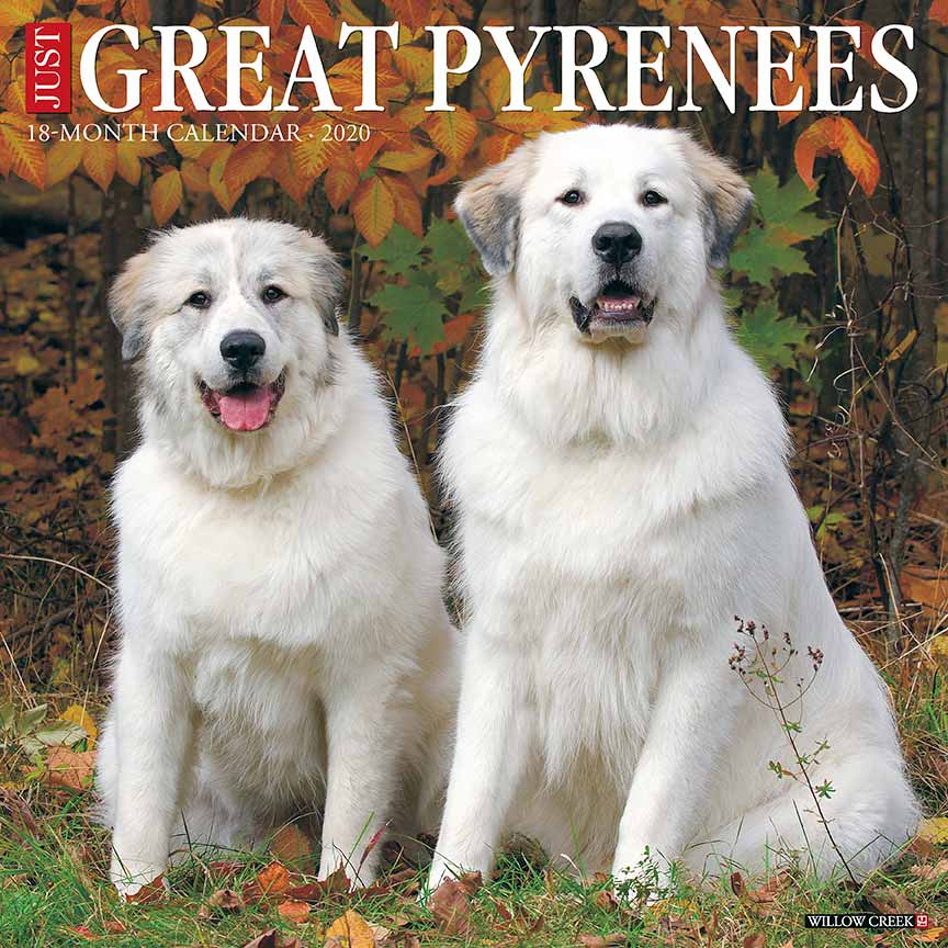 2020 Great Pyrenees Calendar Willow Creek