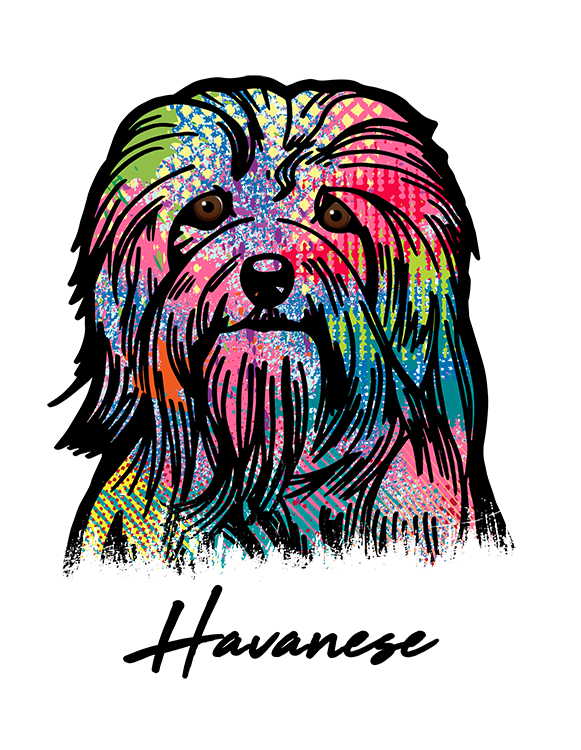 Havanese T Shirt Colorful Abstract